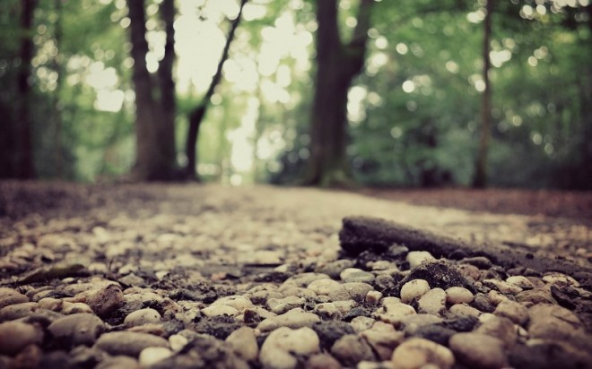 jungle-forest-stones-forest-road-images-227629
