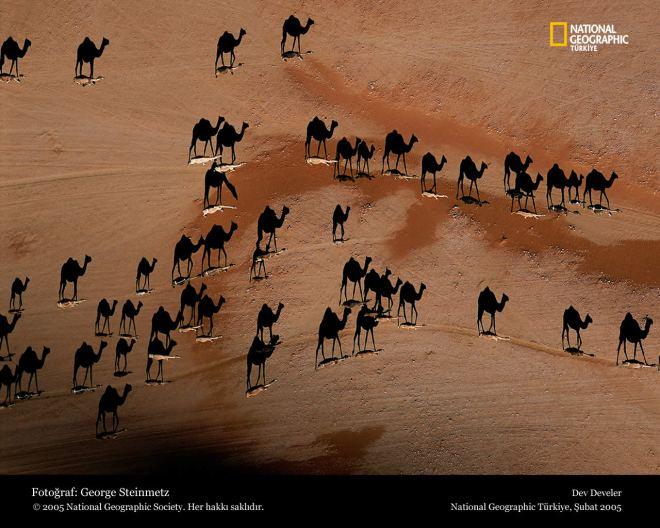 Camellos y sus sombras