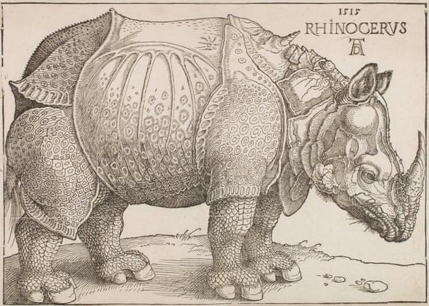 Albrecht Dürer Rinoceros